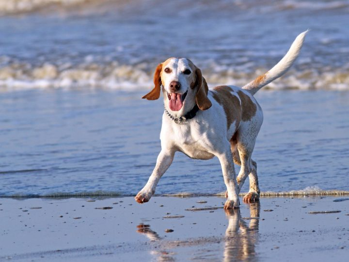 Hund am Meer