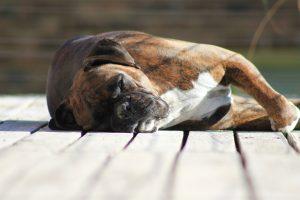 Was Die Schlafposition über Deinen Hund Verrät Sky Filou