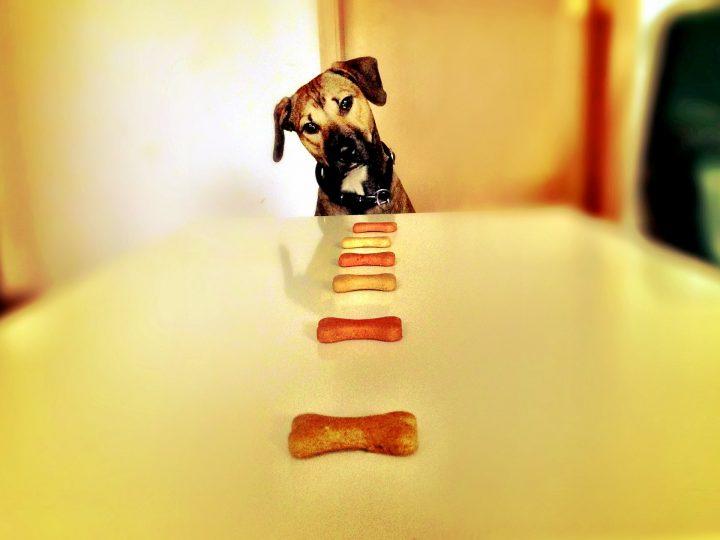 So gewöhnt Ihr Eurem Hund das Schlingen ab
