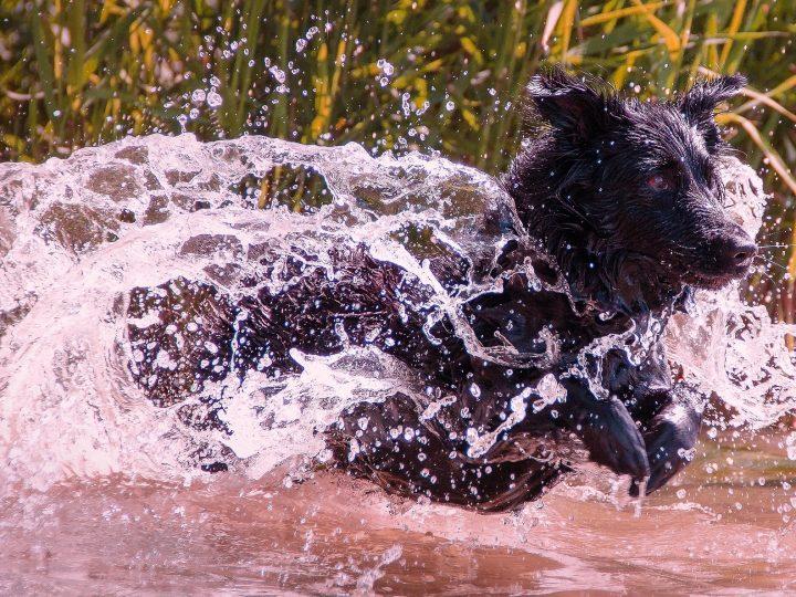 Die besten Tipps gegen unangenehmen Hundegeruch