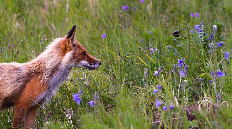 immunsystem stärken hund