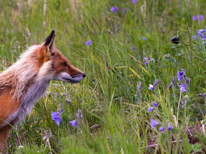 Hunde-Kräuter – Kräuter für einen gesunden Hund