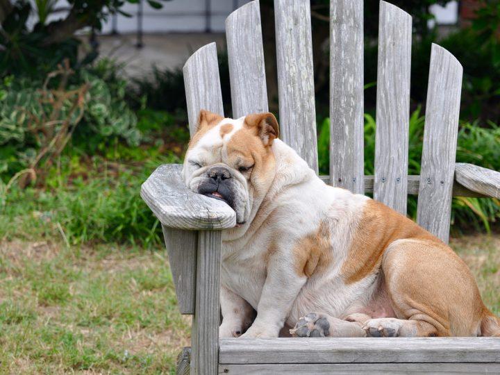 Was die Schlafposition über Deinen Hund verrät