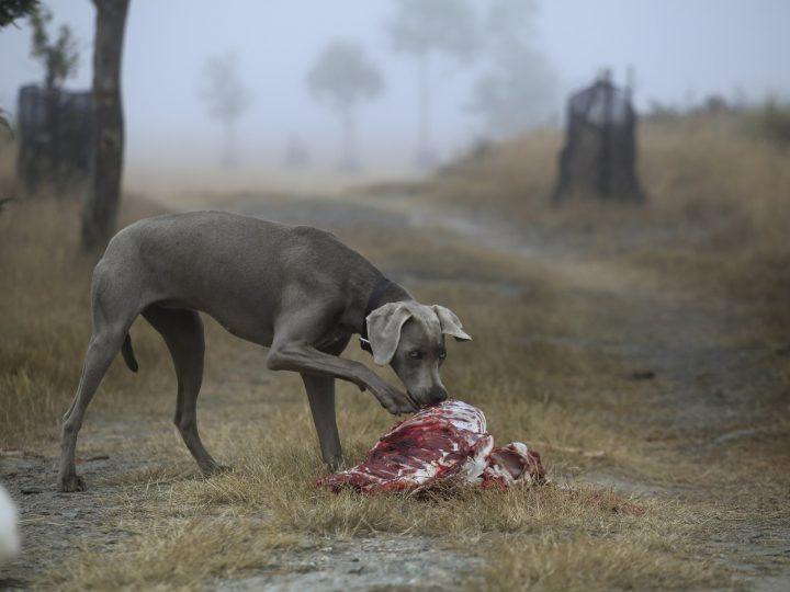 BARF – Rohkost-Ernährung für den Hund