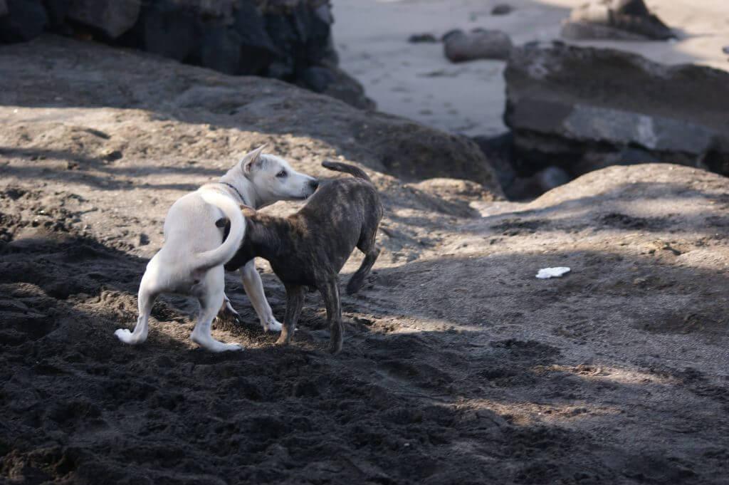 Warum schnüffeln sich Hunde am Hintern?