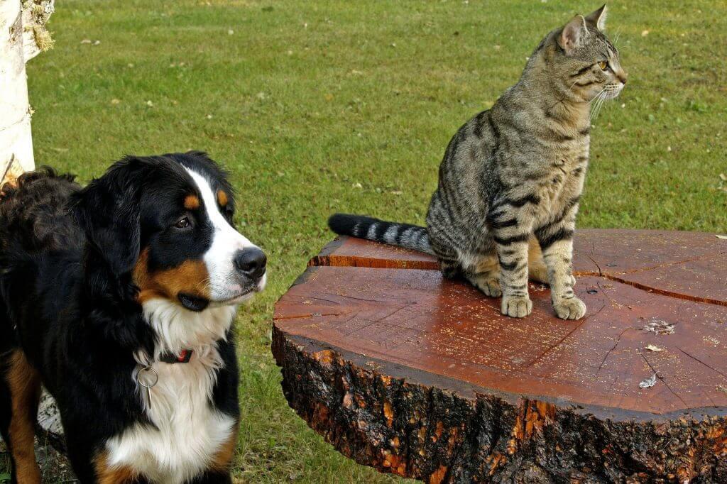 Sind Hunde beliebtesten Haustiere?