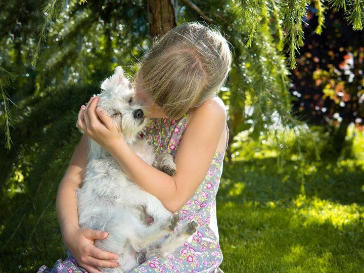 Welthundetag: Was Du schon immer über Hunde Wissen wolltest