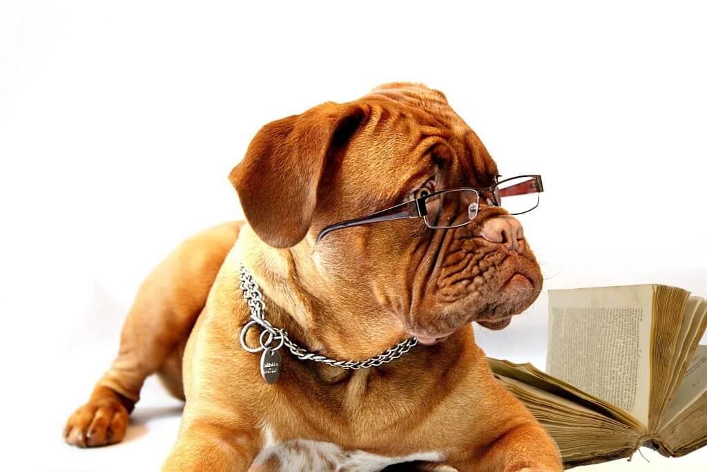 Hund Intelligenz
